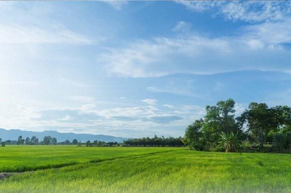 Gambar banner Wakaf Tanah