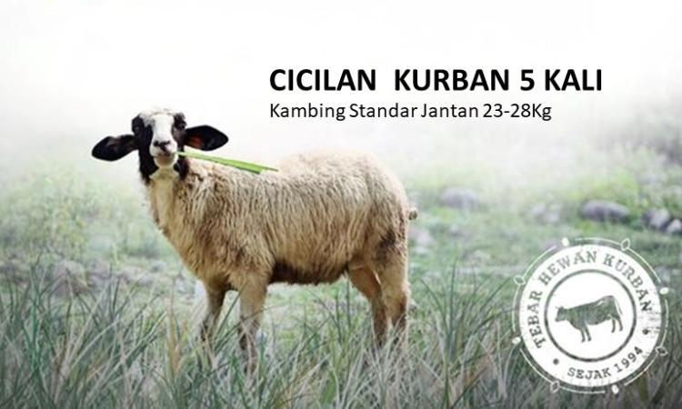 Banner program Cicilan  Kurban 5 Kali Kambing Standar Jantan 23-28Kg