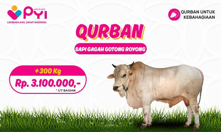 Banner program Qurban Kebahagiaan Paket  Sapi Gagah Gotong-royong